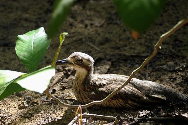Nocturnal Birds