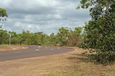 Cacatua sanguinea, Little Corella. Jabiru, Kakadu National Park, NT, Australia. September 2010