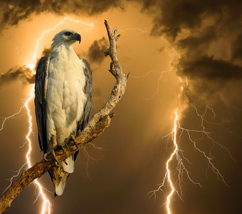 Composite image - Sea Eagle and Lightning