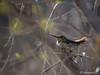 """Nesting Hummingbird - 2"""