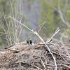My nest - a beaver lodge.
