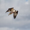 Osprey, Brazoria County, Texas, 10.20.2013