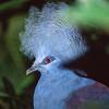 Unknown bird.  Wild Animal Park, San Pasqual, California.
