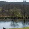 Penshaw Monument from Washington Wetlands Park. I have no idea what the duck in the foreground is!!