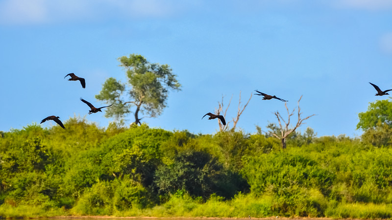 Ducks Fly Over Siloweni Reservoir