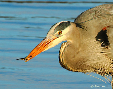 """Heron Hunt"""