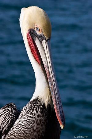 """""""Dock Bird"""""""