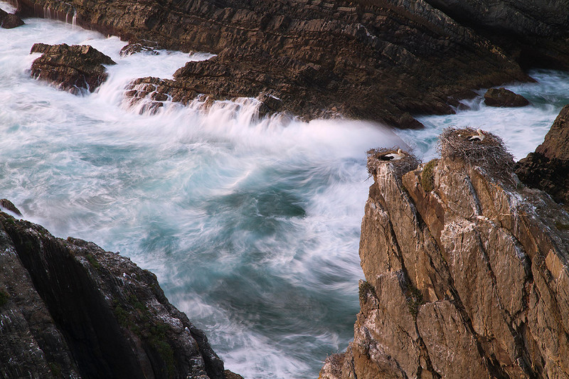Nidos de cigüeña blanca en los acantilados al caer la noche. Costa portuguesa 2011.