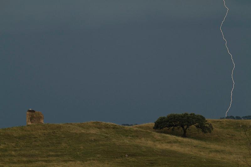 Nido de cigüeñas en el horizonte. 2011