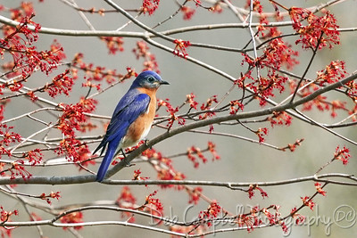 Birds and Buds
