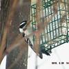 woodpecker 2-26-150013