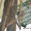 woodpecker 2-26-150012