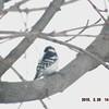 woodpecker 2-26-150014