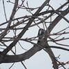 woodpecker 2-26-150015