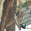 woodpecker 2-26-150011