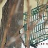 woodpecker 2-26-150009