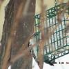 woodpecker 2-26-150010