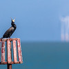 Cormorant and Wind Farm