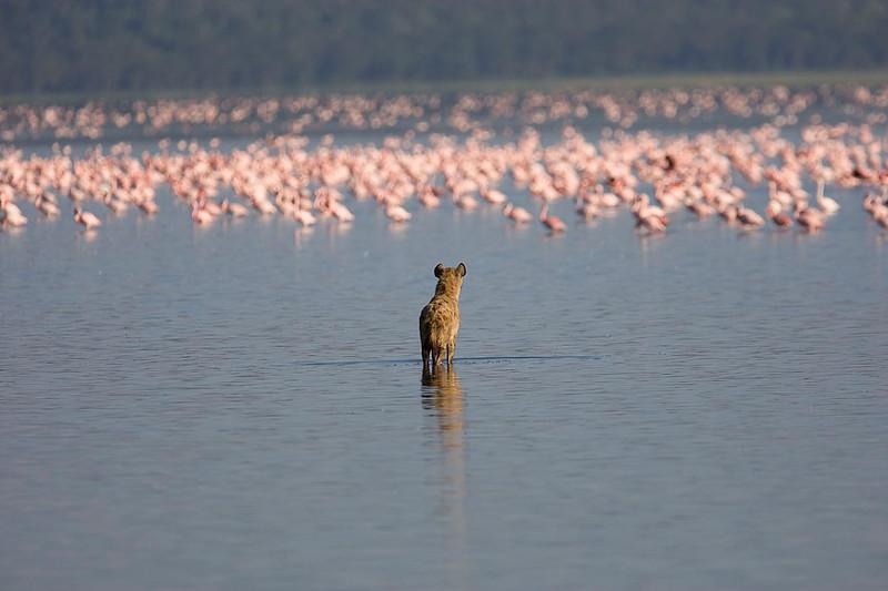 2007 07 22 Lake Nakuru 209