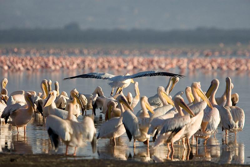 2007 07 22 Lake Nakuru 061