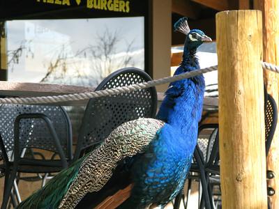 CO 2010 01 Denver Zoo (15)