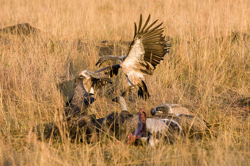 20100909_Maasi Mara_274