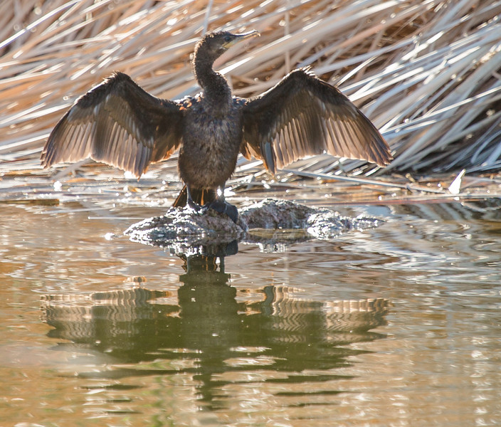 The cormorants were spashing around, warming up and drying off, and putting on quite a show.