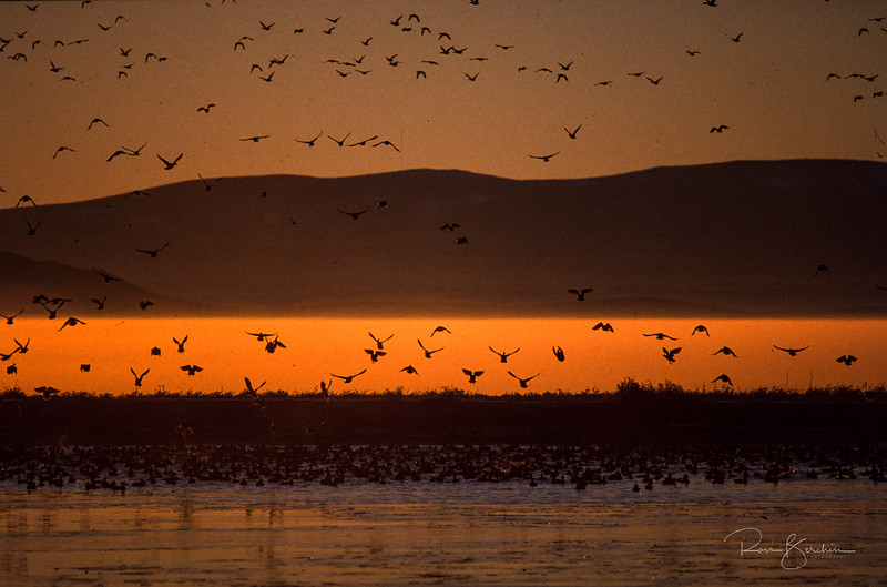 Early morning, Tule Lake, CA
