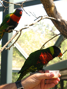 CO 2010 09 Denver Zoo 75