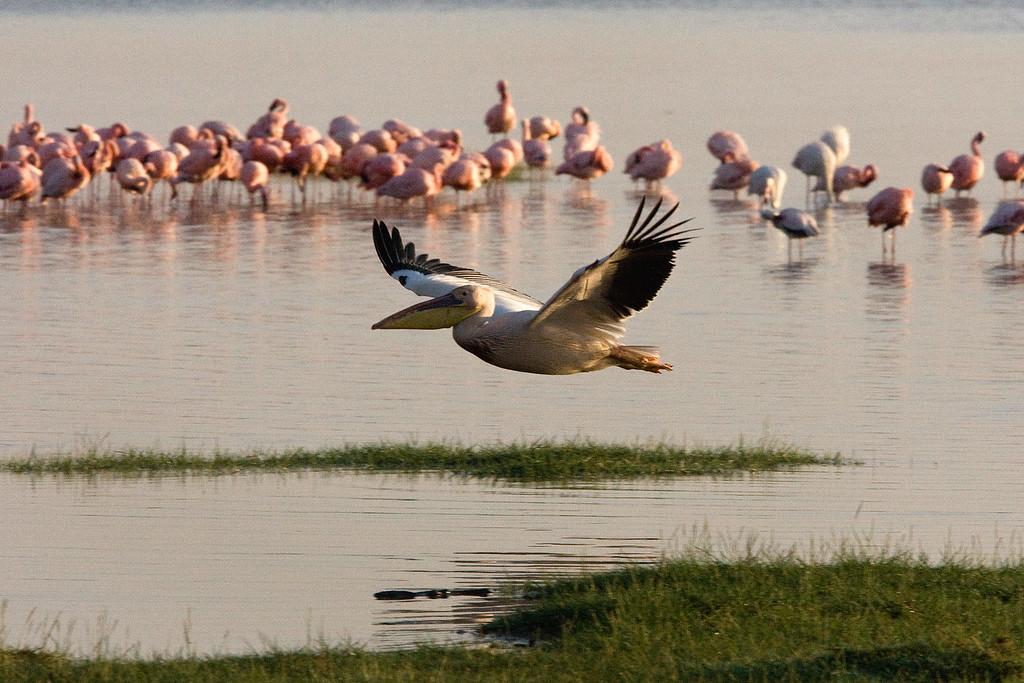 20100907_Lake Nakuru_128