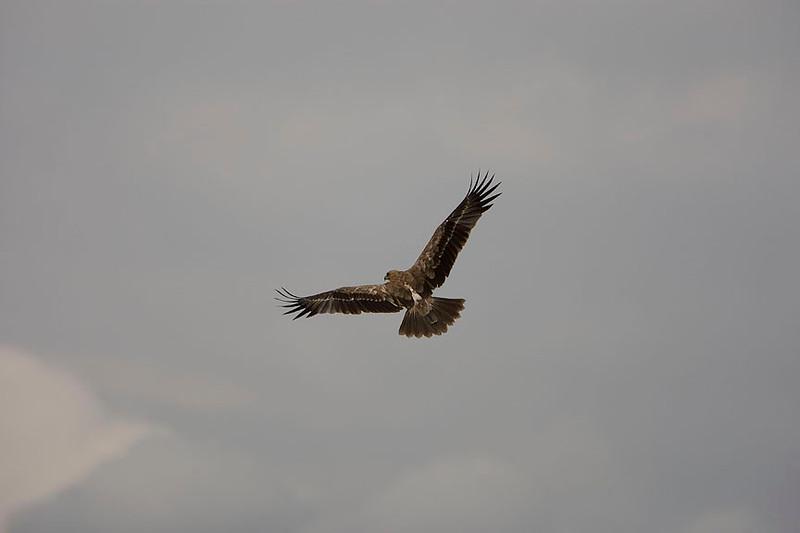2007 07 20 Amboseli 188