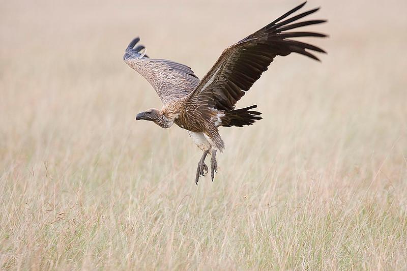 2007 07 25 Masai Mara 266