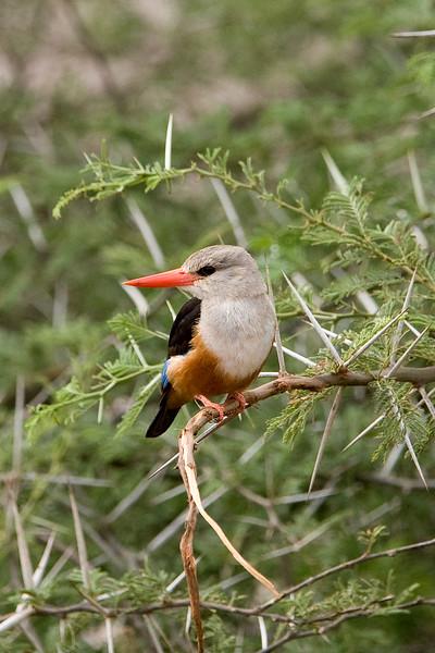 20100903_Samburu_0548
