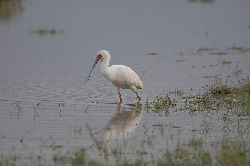 2007 07 19 Amboseli 243