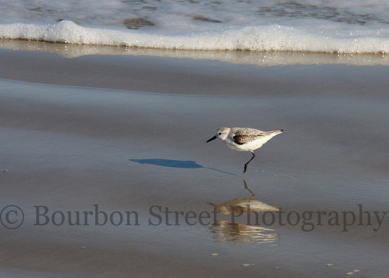 Shore bird on Padre Island TX