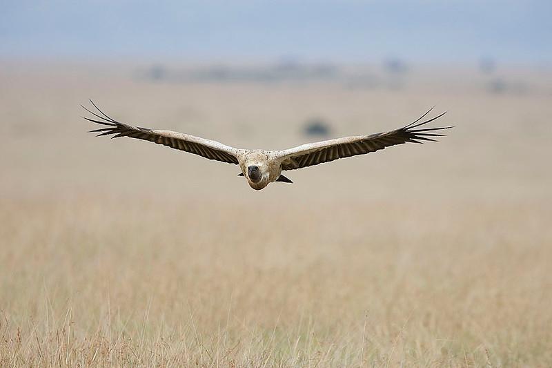 2007 07 25 Masai Mara 161