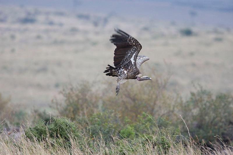 2007 07 23 Masai Mara 053