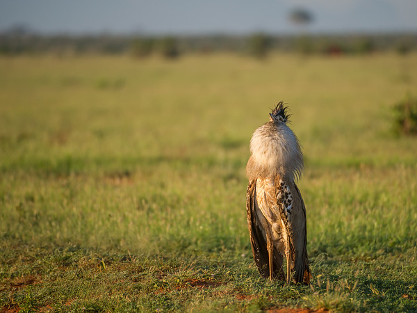Tsavo East Safari to Satao,   Photo by: Stephen Hindley©