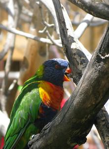 CO 2011 06 Denver Zoo 45