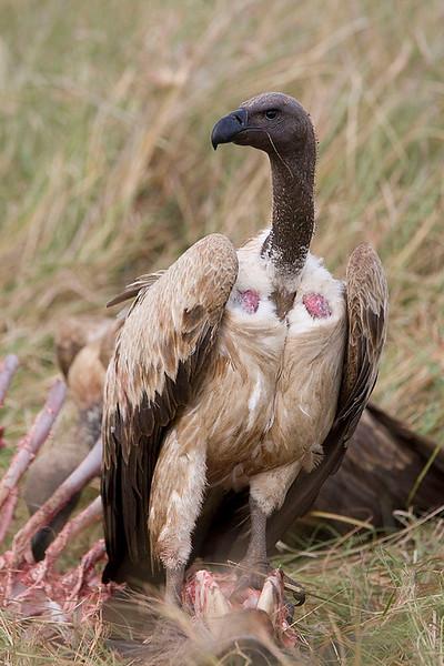 2007 07 25 Masai Mara 281