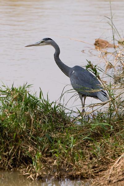 20100902_Samburu_0032