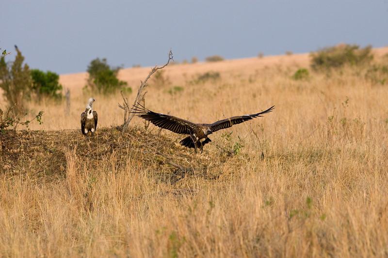 20100909_Maasi Mara_216