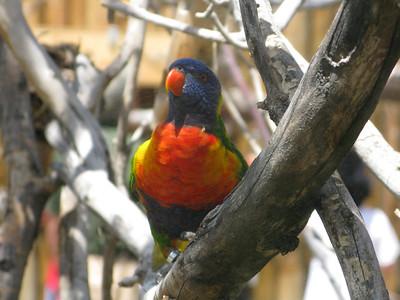 CO 2011 06 Denver Zoo 44