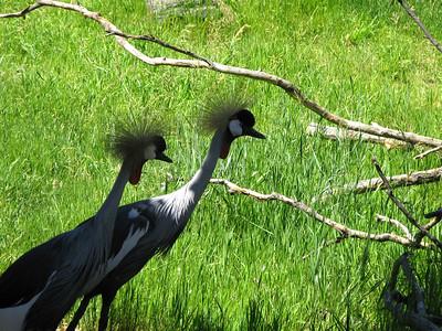 CO 2009 Denver Zoo 0618 (5)