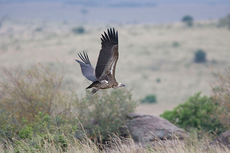 2007 07 23 Masai Mara 070