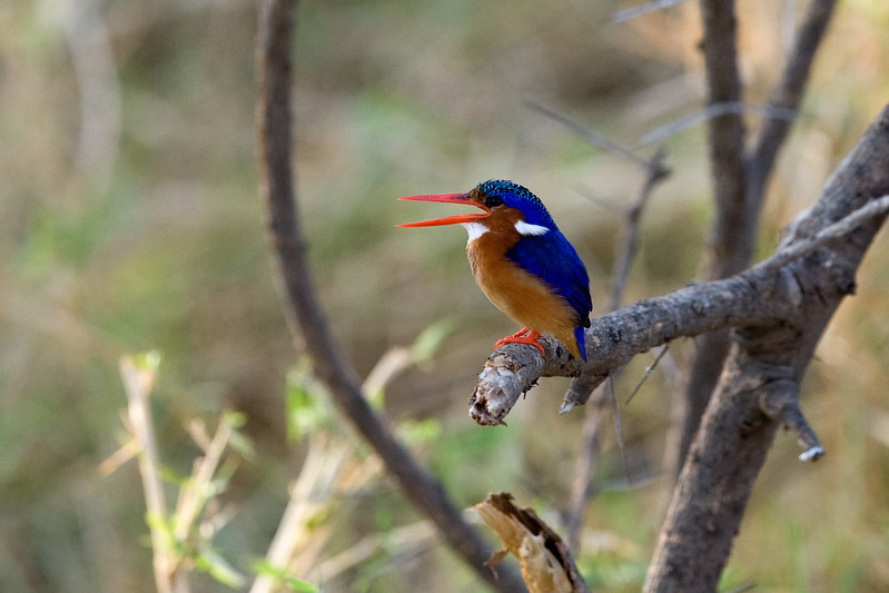 20100905_Samburu_071
