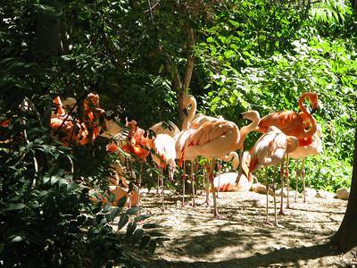 CO 2010 09 Denver Zoo 82