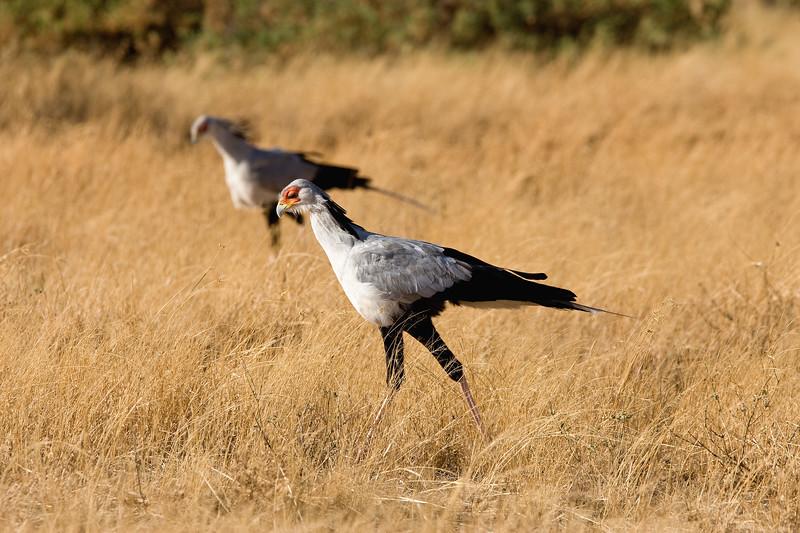 20100903_Samburu_183
