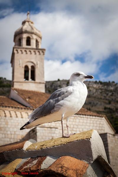 Gull and Church