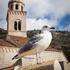 Gull and Church